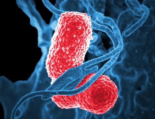 New hypervirulent superbug kills 5 in Chinese ICU, alarming experts