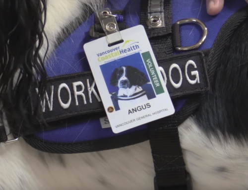 Angus, the paws-itive hospital asset, hits the road for more spaniel-sniffing infection control duty
