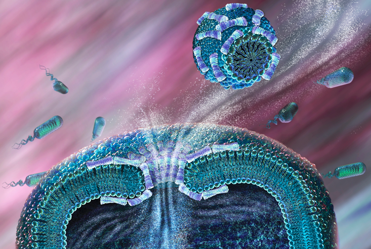 Computer illustration showing antimicrobial peptides penetrating a bacteriums membrane.