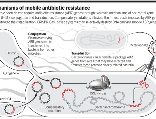 The evolution of antibiotic resistance